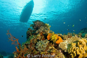 Safety stop on one of many beautiful reefs in the Banda Sea by Larry Polster 